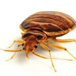 The S.M.A.R.T Way to Hire Bed Bug Extermination Services